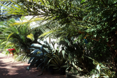 Во дворе -агавы, апельсины, пальмы