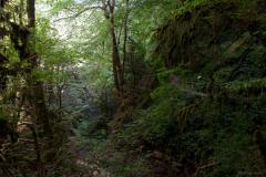 Реликтовый колхидский лес