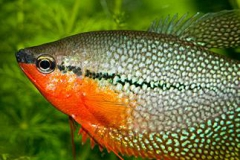 Рыбы_1