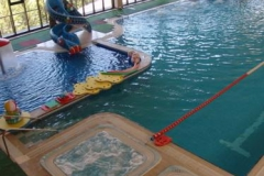 pool chld