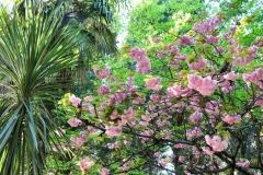 Сочи-круглый год цветущий сад